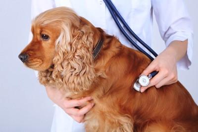 青の聴診器を当てる犬