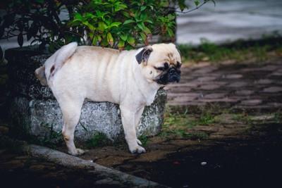 草の上に立つ犬
