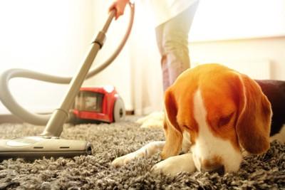 掃除機をかける飼い主とくつろぐ犬
