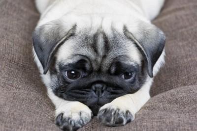 緊張している犬