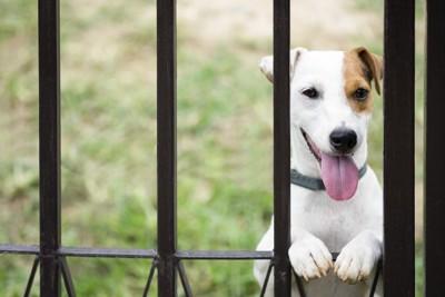 柵の間から顔出している犬の写真