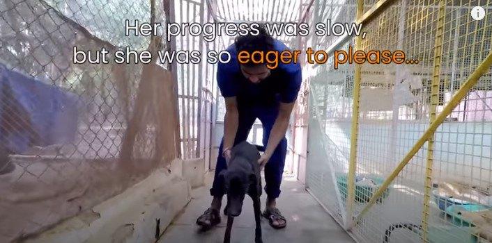 理学療法を受ける犬