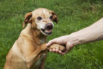 犬の手を握る、マズルにシワを寄せる犬
