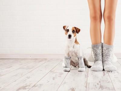 女性の足にくっつく犬
