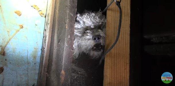 顔を出した犬