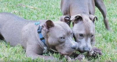 芝生の上に2匹の犬