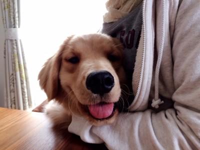 一緒にくつろぐ愛犬