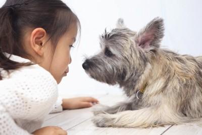犬を見つめる女の子