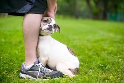 飼い主の足にぴったりとくっつく犬