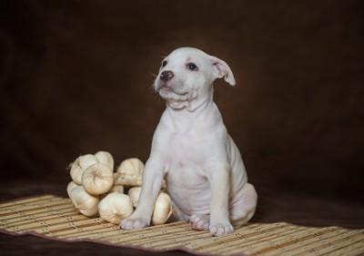 にんにくの隣に座る子犬