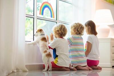 窓の外を見る子犬と子どもたち