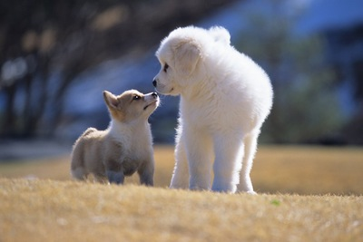 鼻で挨拶をする2匹の犬