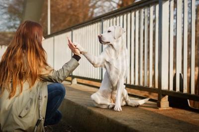 女性とハイタッチする犬