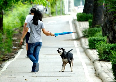 傘を持つ女性と犬