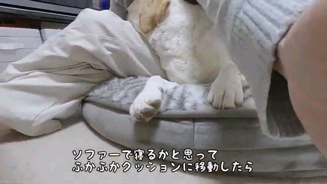 ソファーで~字幕