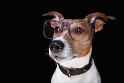 遠くを見つめるメガネをした犬