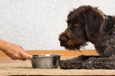 ドッグフードを差し出す手と黒い犬