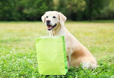袋を持った犬