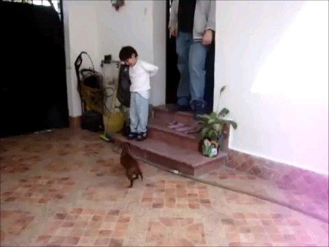 走りよる犬