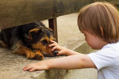 犬を撫でる小さな男の子