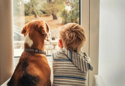 窓の外を眺める少年と犬