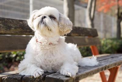 ベンチから動かない犬