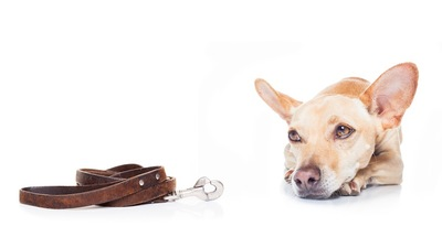 リードの横でふてくされる犬