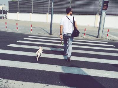 横断歩道を渡る男性と犬