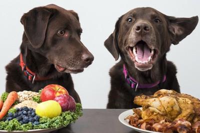 野菜と肉が載ったお皿と二匹の犬