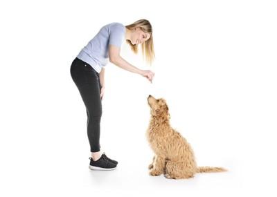 トレーニング中の女性と犬