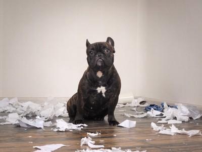 部屋を荒らす犬