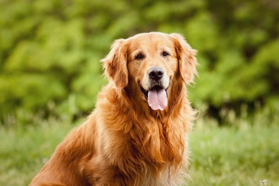 凛々しく座る犬