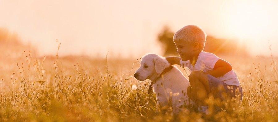 草原で一緒に座る少年と犬