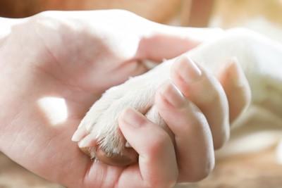 犬の前足を掴む
