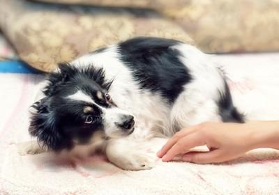 人の手を怖がる犬