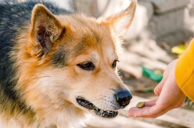 手からおやつをもらう犬