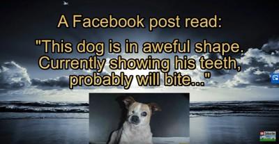 犬の紹介写真