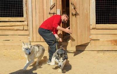 脱走する犬2匹