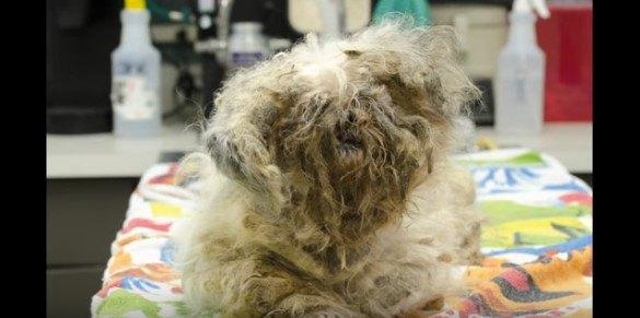体毛がからまった犬