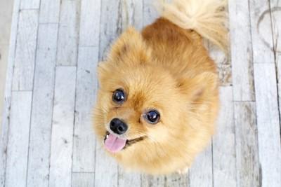 潤んだ瞳でこちらを見上げる犬
