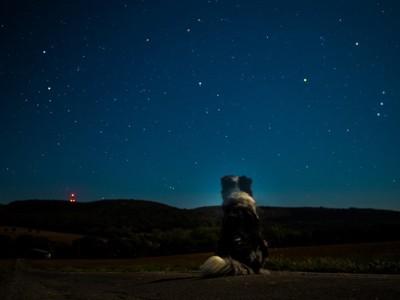 星空とボーダーコリーの後ろ姿