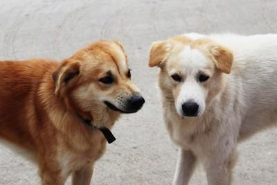 警戒し合う二頭の犬
