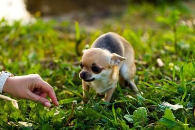 手に怯える犬