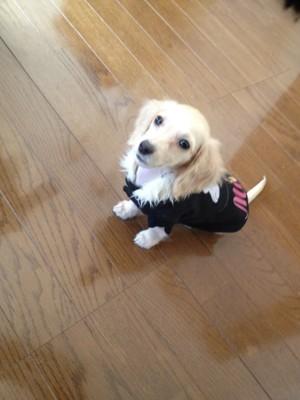 我が家の愛犬の仔犬時期