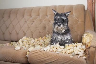 ボロボロのソファと犬
