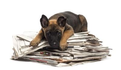 新聞紙の上に乗る犬
