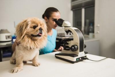 犬と顕微鏡を覗く医師