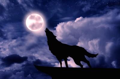 満月に遠吠えするオオカミ