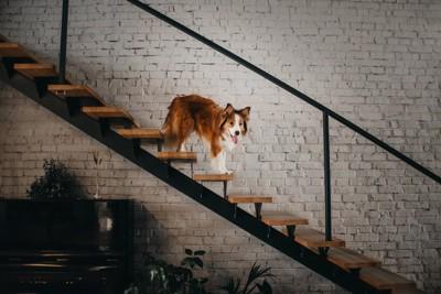 おしゃれな階段を下りる犬
