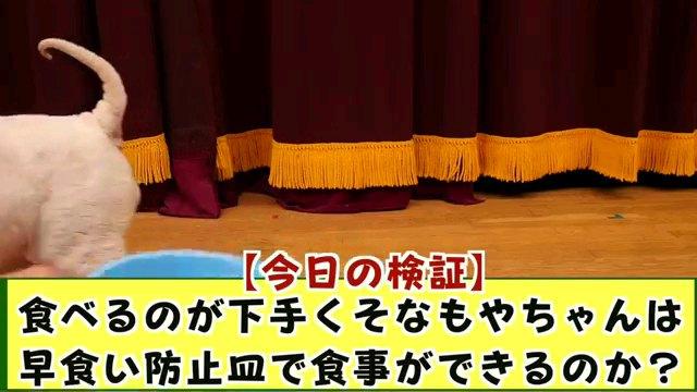 [今日の検証]~字幕